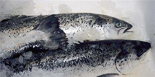 重磅!专家发声:海鲜鱼类不会感染新冠病毒!